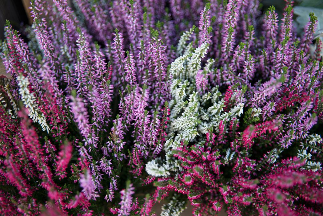 blomster-som-taler-hosten-lyng